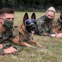 German Army trains sniffing dogs to detect the coronavirus disease (COVID-19) in Daun